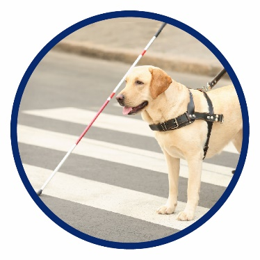 A person and a service dog crossing a road